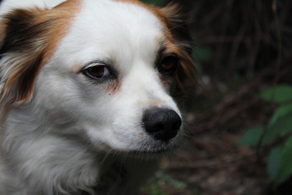 Kremacja psa cena
