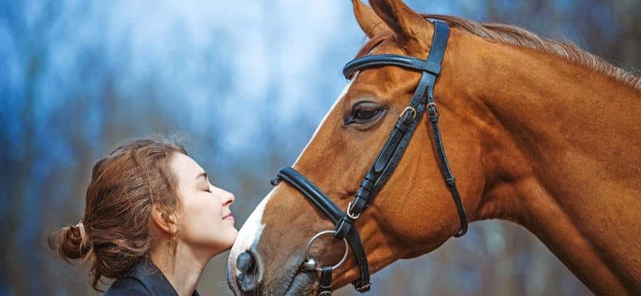 kremacja konia